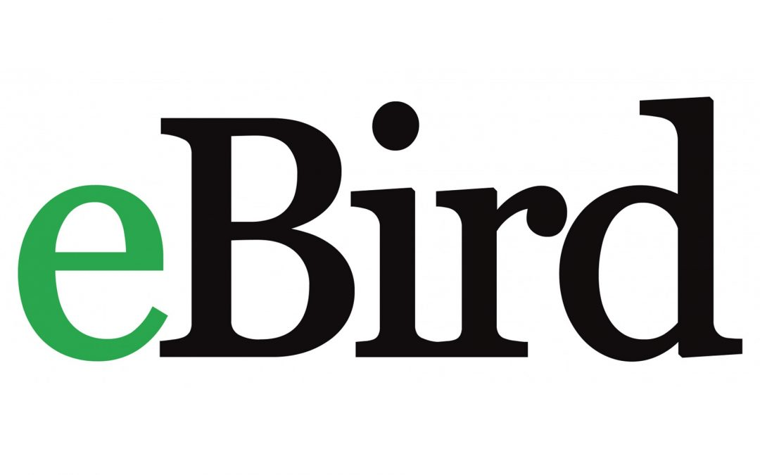 Episode 14: Data science in birding: the ebird experiment
